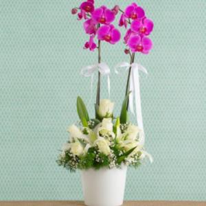 İKİ DALLI MOR ORKİDE – Yenimahalle Çiçek ANKARA