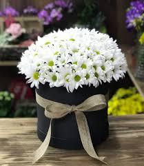 Yenimahalle-Çiçek- kutuda papatya-ANKARA