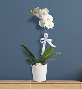 Tek dal beyaz orkide yenimahalle çiçek Ankara