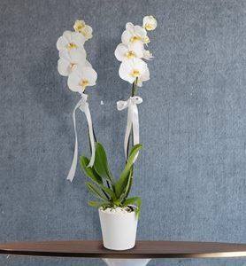Yenimahalle Çiçek Siparişi Çift Dal Beyaz Orkide Ankara