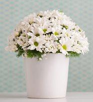 Yenimahalle Çiçek Siparişi Papatya Yenimahalle Çiçekçi
