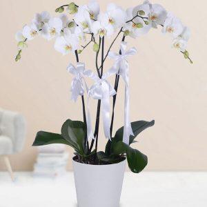 Yenimahalle Çiçekçiyle Çiçek Gönder -3 Dallı Beyaz Orkide